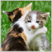 Cat-hug-icon