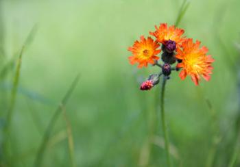 orange flower in a field