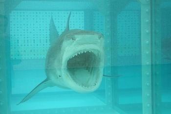 Sharkattack.jpeg