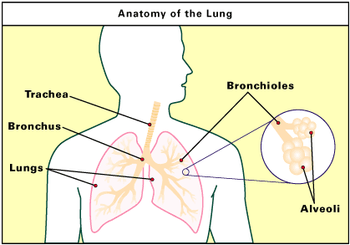 Lung picture 2.jpg