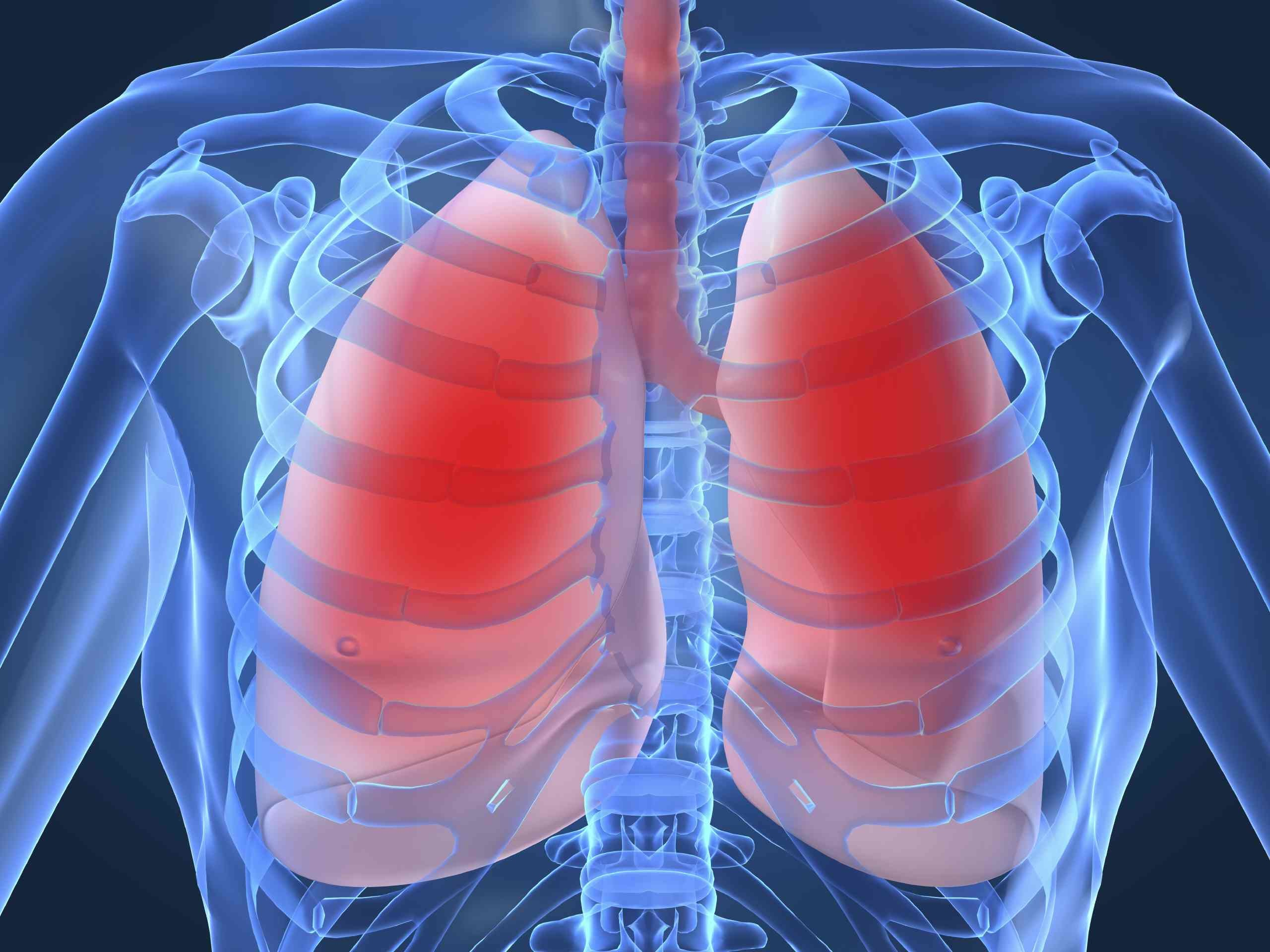 lowres lungs