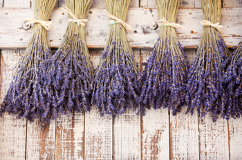 Provence Dried Lavender