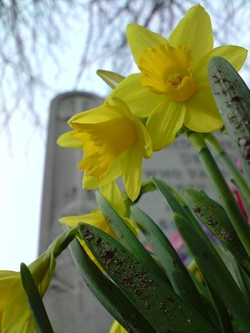 daffs and graves