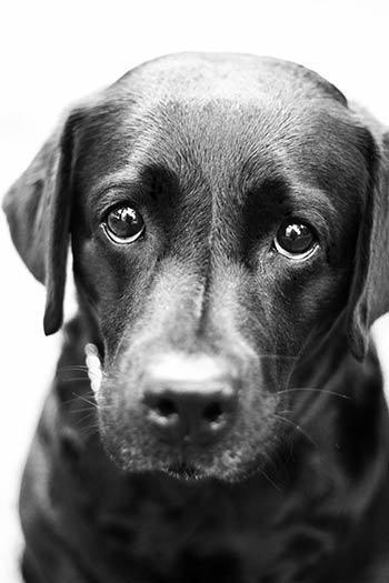 sad-doggy