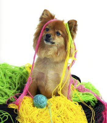 puppy-yarn